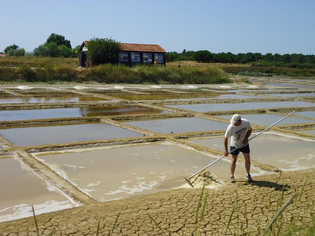 O-port-des-salines-vue-salines-récolte